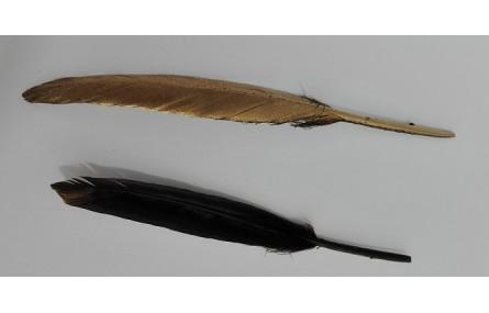 Pluma negra 130mm dorada por un lado