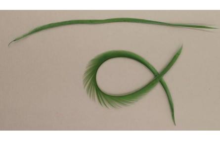 Pluma Rígida 170mm Longitud Verde